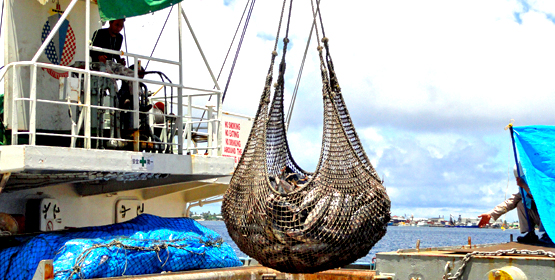 RMI eyes PNG tuna action
