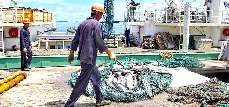 Tuna operations ramp up